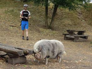 Photo: proto se říká tlustej jako prase