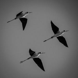 Stilts in Black and White.jpg
