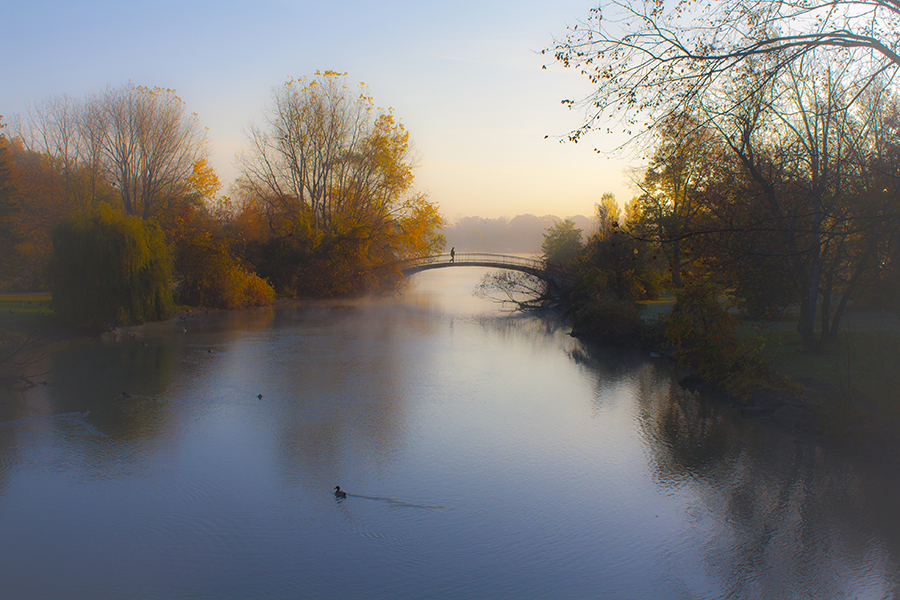 The Bridge in Autumn by Jessean Garcia - Novices Only Landscapes ( water, orange, walking, stream, peaceful, park, colors, beautiful, ducks, morning, dawn, autumn, sunset, fall, trees, sunrise, bridge, river )