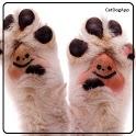 CatDogApp icon