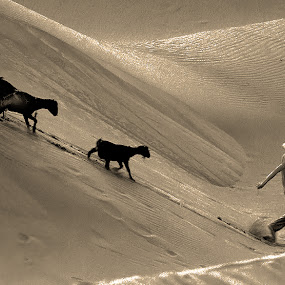 ...go home by Noorhadi Saleh - Landscapes Deserts