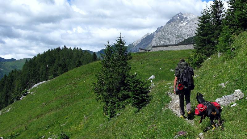 Into the Wild di MTB_Friuli