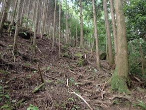 植林斜面の急登