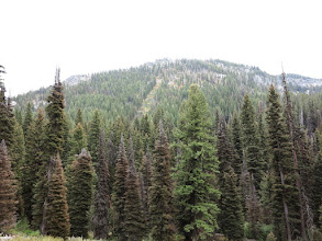 Photo: a lot of sick trees in the area