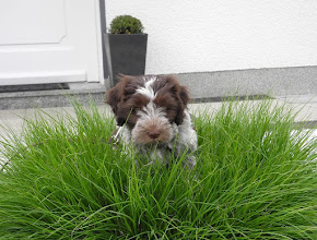 Photo: Toffie mal sehr fotogen im Gras - auch sie hat sich schon prima eingelebt