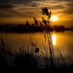 Sunset on the Pond by Richard States - Landscapes Sunsets & Sunrises ( water, silhouette, sunset, lake, landscape, evening, reeds, golden,  )