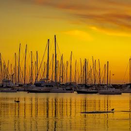 Golden Sunset by Keith Walmsley - Transportation Boats ( victoria, horizon, ripples, coast, sunset, australia, boats, clouds, birds, landscape )