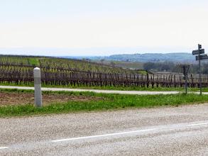 Photo: le vignoble de Cleebourg