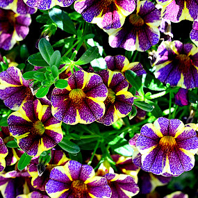 Cluster of Flowers by Jennifer Parmelee - Flowers Flower Gardens ( purple, green, colors, gardens, yellow, places, flowers,  )