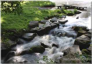 Photo: NatureFootstep Photography http://www.nfbild.blogspot.com/