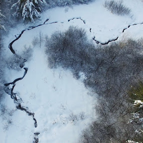 Winter landscape by Olivier Grau - Landscapes Weather ( winter, drone, tree, snow, dji, aerial, forest,  )