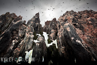 Photo: *Don't forget to look up, and use your wide angle for wildlife* _And when you do, keep your mouth closed_  Taken along the bird cliffs of the Spitsbergen & Svalbard archipelago in the Norwegian Arctic. These black guillemots and thick-billed murres fill the sky as they head back and forth their nests as they fill up in the fertile sea. It's hilarious to watch as some of these birds are so fat and full of food that they dive off the cliffs and barely take flight before they crash into the sea.  When out among wildlife, it's easy to assume your best friend will be a long telephoto lens shooting across the landscape, that's something difficult to do in a boat that's rocked hard by waves bouncing off cliffs.   *Technical facts:* Instead I preferred to use my 16-35mm lens in this situation, I shot directly up as I got speckled by bits of guano (it's good luck!)  this really expresses what this environment is like. I had to process the RAW twice in lightroom and burn down the sky a lot in photoshop.