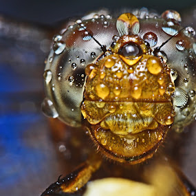 wet by Dhanu Wijaya - Animals Insects & Spiders ( pwcinsectsandspiders )