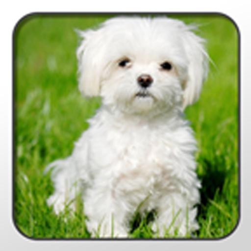 Maltese Theme - Nova/ADW/GO 個人化 App LOGO-硬是要APP