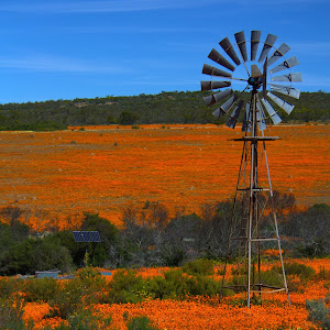 C:\Documents and Settings\shongololo\My Documents\My Pictures\Picasa\Exports\Namakwaland\Windmill and flowers.jpg