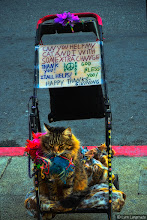 Photo: My first #Caturday post for +Christophe Friedli and +Lee Daniels .  I saw this cat sitting by itself in this stroller yesterday on the sidewalk in Union Square in SF on the busiest shopping day of the year. I had a difficult time getting this shot because (1) I kept getting bumped and (2) people kept walking in front of the subject.  I'm not sure where the owner was, but this beautiful cat was just quietly sitting there, not moving—kind of working for spare change.  And of course, it was extremely ironic to see a homeless cat (and ostensibly its homeless owner) sitting right in the middle of one of the most expensive shopping districts in America. Tons of wealthy people were walking right by this cat. Nobody seemed to care. But I did, and I thought all of the wonderful people who post for #Caturday would care too.  I hope +Christophe Friedli won't be too upset with me for posting this shot :)