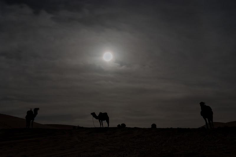 Silhouette lunare nel Deserto  di Palmie