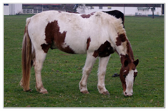 Photo: Pferde auf der Weide   PENTAX K-7  ISO  800  Belichtung 1/100 Sek. Blende f/5.6  Brennweite 80mm