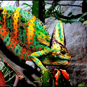 play of colour  by Muthu Ravi - Abstract Patterns ( colour, reptiles, animals, patterns, chaemeleon )