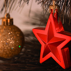 Christmas shiny by Aleksandar Zhivkov - Public Holidays Christmas ( star, christmas, christmas tree, shiny,  )