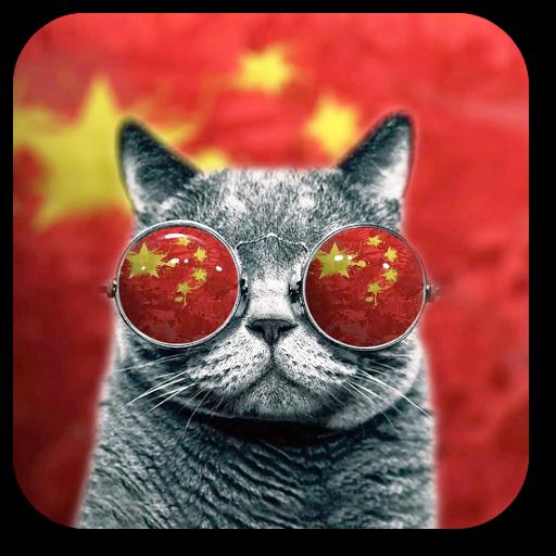 Wallpaper Cool Cat