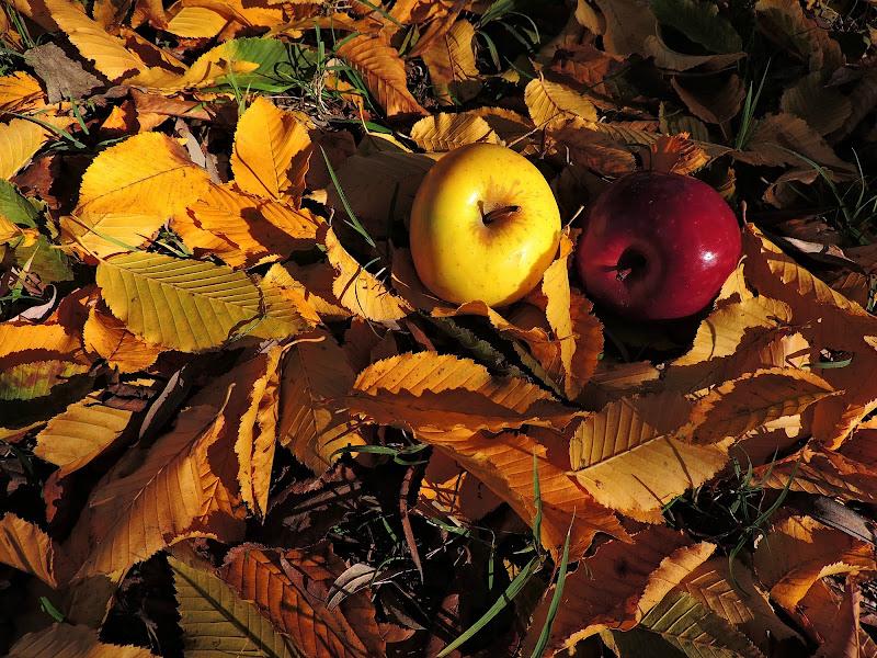 Autumn di donyb
