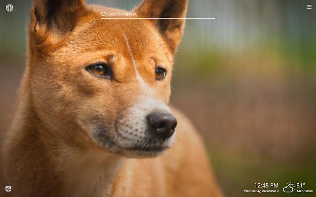 Dingo Dog HD Wallpaper New Tab