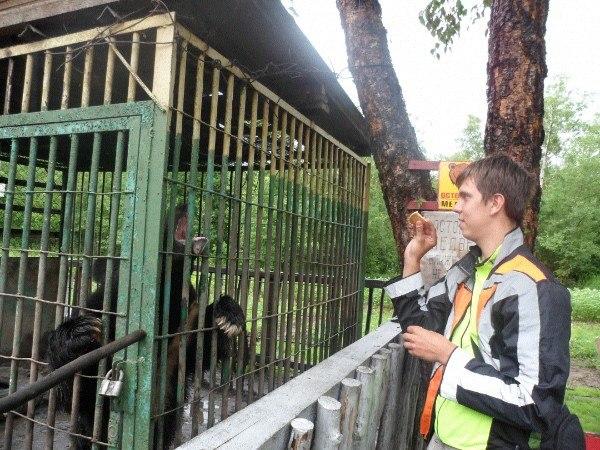 Медведь в клетке возле кафе на пути к Владивостоку
