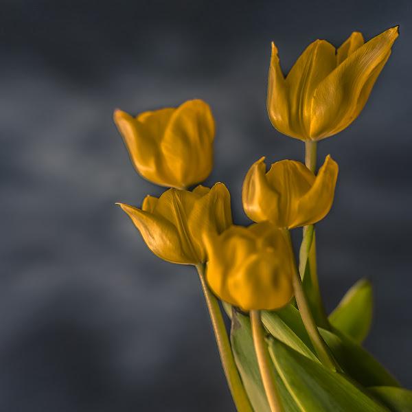Photo: Tulips