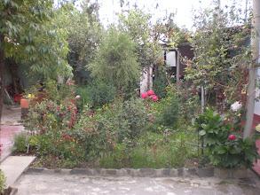 Photo: Garden 1
