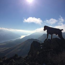 top of the world by Jeremy Thamert - Uncategorized All Uncategorized ( bird hunting, mountain, hunting, scenery, dog, world, river )