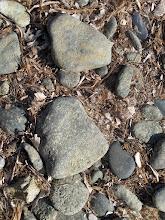 Photo: Steine und getrocknetes Seegras (Erika)