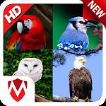 60 Bird Sounds & Ringtones