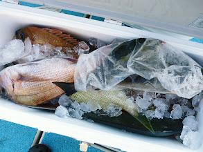 Photo: ハリをのみこんだ魚はシメて、クーラーBOXに入れてます。