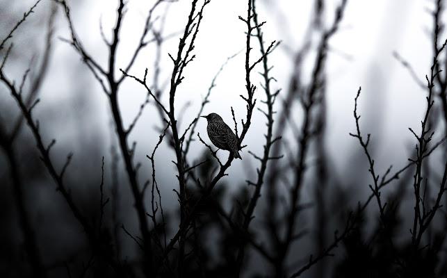 Bird di marco_ridolfi