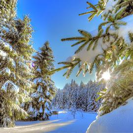 by Marijan Vucic - Nature Up Close Trees & Bushes