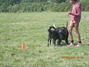 Photo: Daffy BC and Tilly Labradoodle with Natasha