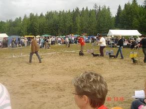 Photo: 2007 ROP KASV Tuusula tuomari Markku Lampero Ässä, Natsi, Kata ja Dooris