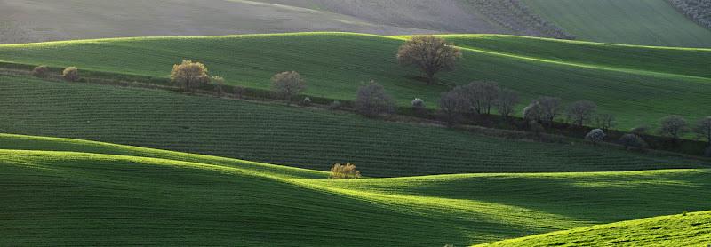 Verde Dauno di Jorjo