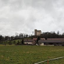 Habsburg Castle (Schloss Habsburg)