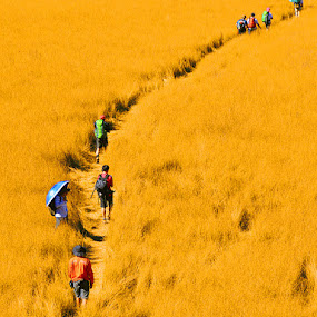 Hiking on the fields of gold by Barry Rattu - Sports & Fitness Other Sports