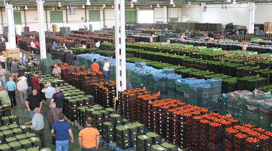 Almería, a la cabeza de España en empresas cooperativas