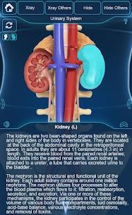 My Urinary System - náhled