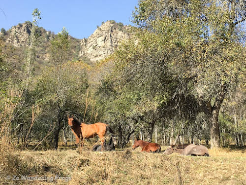 Kyrgyzstan Trekking: Guide to Sary-Chelek in the Tian Shan Mountains // Horses in the Sary-Chelek Biosphere Reserve