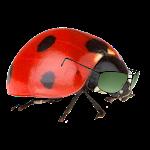 Digital Drug Bug