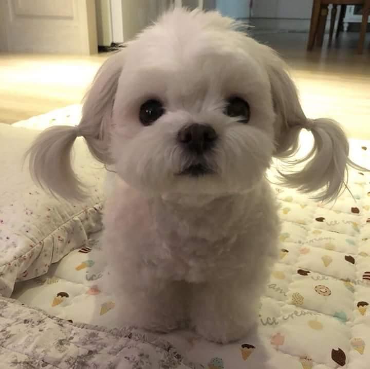 IU dog