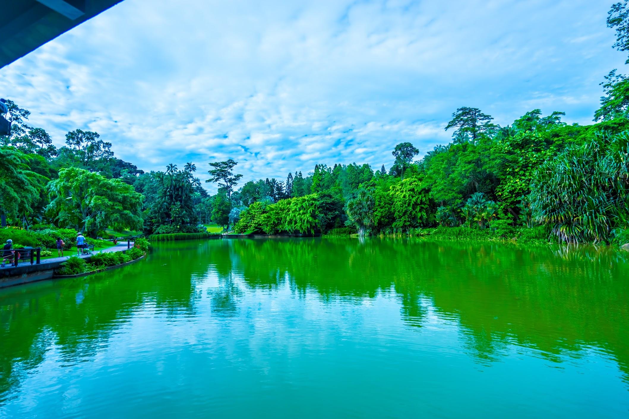 シンガポール植物園(ボタニック・ガーデン) シンフォニー・レイク2