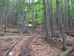 Photo: 16.Podejście dość jednostajnie strome a miejscami leży trochę powalonych drzew.