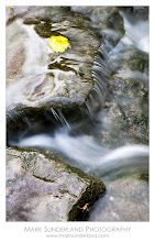 Photo: #FallFriday  Autumn Leaf in Gordale Beck  My contribution to Fall Friday curated by +Karin Nelson and +Stephonie Ogden this week - the last traces of autumn in Gordale Beck near Malham recently.  Canon EOS 5D, 24-105mm at 105mm, ISO 50, 1.3s at f22