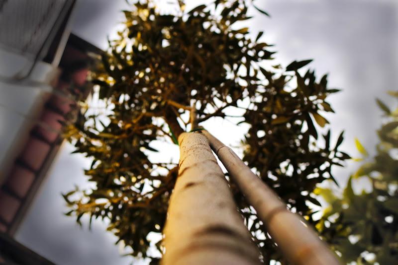 il piccolo albero della vita di lorenzcanario